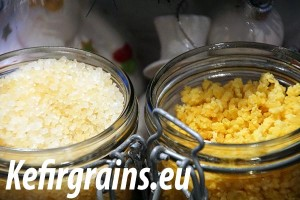 How to dehydrate kefir grains ?